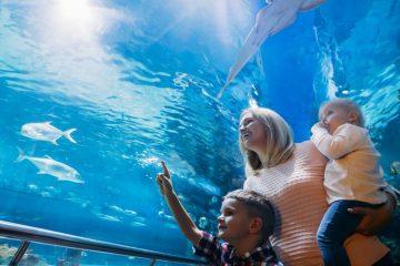 hurghada-grand-aquarium