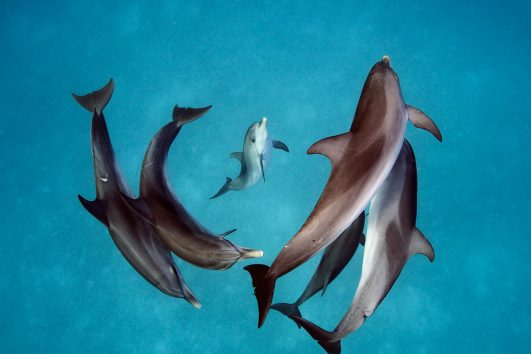 Swimming with Dolphins Hurghada